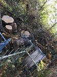 В Черни во время уборки на кладбище могилы завалили спиленными деревьями, Фото: 4