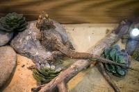 Тульский экзотариум: животные, Фото: 41