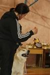 В Туле прошла всероссийская выставка собак, Фото: 33