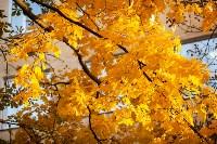 Золотая осень в Туле-2019, Фото: 130
