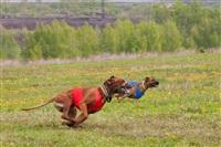 В Туле состоялись собачьи бега, Фото: 36