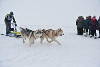 Праздник северных собак на Куликовом поле , Фото: 87