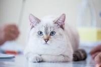 """Выставка """"Пряничные кошки"""". 15-16 августа 2015 года., Фото: 31"""