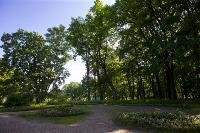 Летний день в Ясной Поляне, Фото: 50