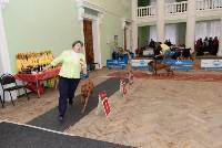 """Выставки собак в ДК """"Косогорец"""", Фото: 11"""