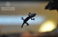 Ящерицы в Тульском экзотариуме, Фото: 6