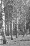 Толстой покупал березы на гонорар от «Войны и мира», Фото: 6