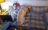 Забавные собаки, Фото: 5
