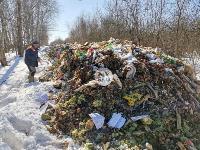 Под Тулой неизвестные сбросили в лесополосе несколько тонн гнилых овощей, Фото: 13