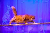 Театр кошек в ГКЗ, Фото: 66