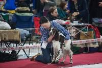 Выставка собак в Туле, Фото: 113