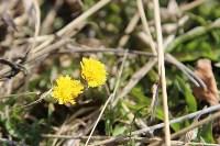Краски весны в Туле, Фото: 35