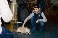Выставка собак DogLand, Фото: 24