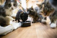 Волонтеры спасли кошек из адской квартиры, Фото: 62