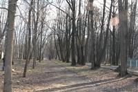 Жуки-короеды напали на деревья в Горелках, Фото: 1