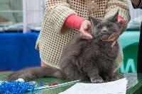 Выставка кошек в Туле, Фото: 4