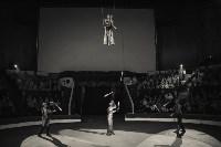 «Шоу Слонов» в Тульском цирке, Фото: 30
