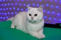 В Туле прошла выставка «Пряничные кошки» , Фото: 79