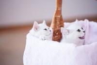"""Выставка """"Пряничные кошки"""". 15-16 августа 2015 года., Фото: 109"""