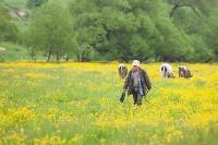 Коровы, свиньи и горы навоза в деревне Кукуй: Роспотреб требует запрета деятельности токсичной фермы, Фото: 7