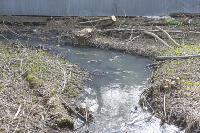 С заброшенных очистных канализация много лет сливается под заборы домов, Фото: 5