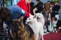 Выставка собак в Туле, Фото: 117
