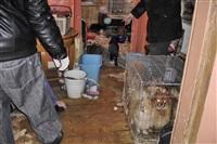 Похищенные собаки, Фото: 21