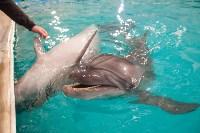Дельфины, Фото: 9