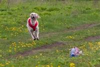 В Туле состоялись собачьи бега, Фото: 43
