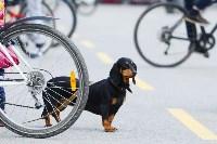 Первомайский велопробег, Фото: 7