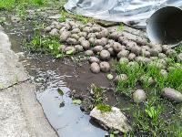 Провал дороги в Мясново, Фото: 10