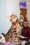 Международная выставка кошек. 16-17 апреля 2016 года, Фото: 106