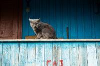 Тульские котики, Фото: 23