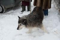 Крематорий для собак в Венёве, 24.03.2016, Фото: 34