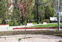 Тульская сакура зацвела в Керчи, Фото: 5