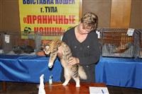 В Туле прошла международная выставка кошек, Фото: 69