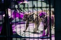 Шоу Lovero в тульском цирке, Фото: 38