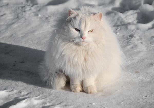 Котик в Поленово