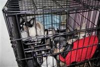 Похищенные собаки, Фото: 22
