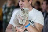 В Туле прошла выставка «Пряничные кошки» , Фото: 50