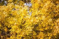 Золотая осень в Тульской области, Фото: 27