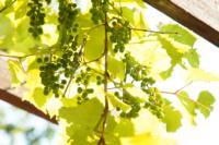 Сергей Белов: Я угощаю телекомпанию домашним вином, Фото: 4