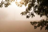 Центральный парк, утро, осень, Фото: 3