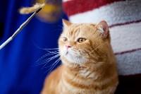 Выставка кошек. 4 и 5 апреля 2015 года в ГКЗ., Фото: 106
