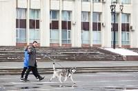 Мартовский снег в Туле, Фото: 11