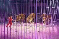 Тульским пенсионеркам на 8 Марта подарили поход в цирк, Фото: 37