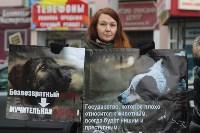 Более 8000 туляков требуют запретить убийство бездомных животных, Фото: 26