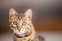 """Выставка """"Пряничные кошки"""". 15-16 августа 2015 года., Фото: 89"""