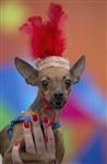 Собачий карнавал, Фото: 9
