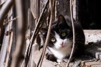 Тульские котики, Фото: 72